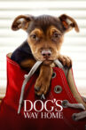 A Dog's Way Home Movie Streaming Online Watch on Google Play, Youtube