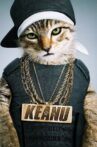 Keanu Movie Streaming Online Watch on Google Play, Hungama, Youtube, iTunes