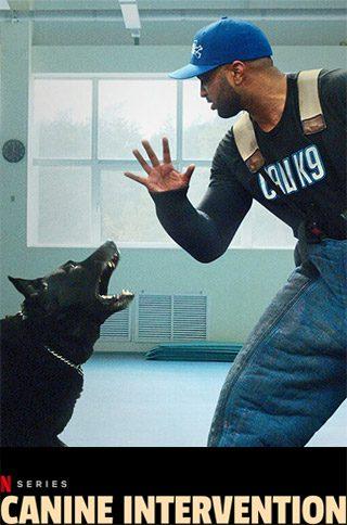 Canine--Intervention