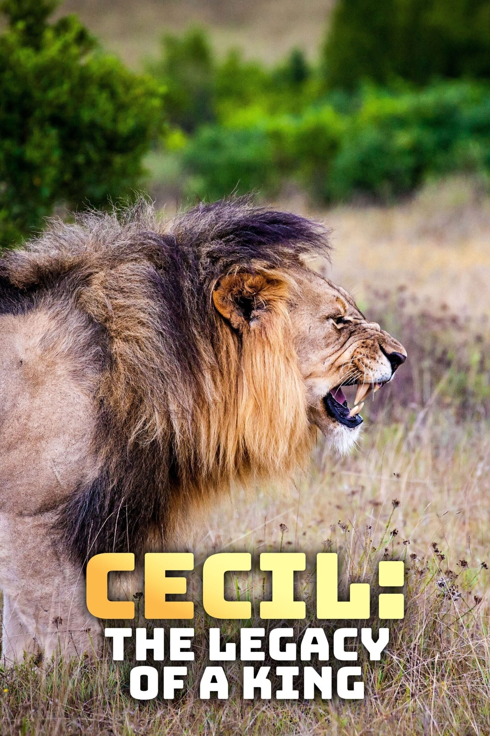 Cecil: The Legacy of a King Movie Streaming Online