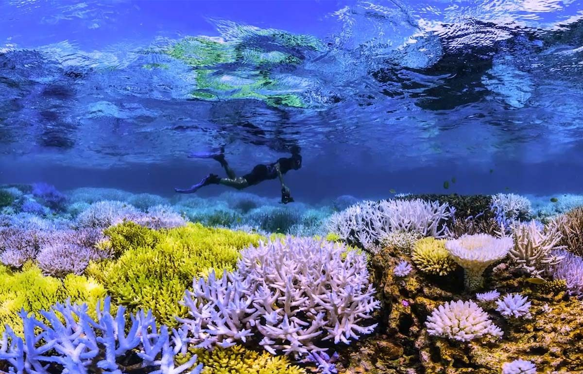 Chasing Corals