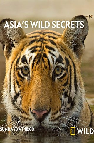 Whether-it-comes-from-the-monsoon,-from-Himalayan-meltwater,-the-tides-or-snow,-every-animal-in-Asia-has-a-story-to-tell-about-water.